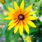 Ein prachtvolles Blumenmeer erwartet Sie in der Ferienanlage Teichwiesn
