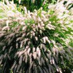 Ferienanlage Teichwiesn – Flora & Fauna