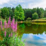 Ferienanlage Teichwiesn – Der Teich