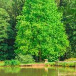 Naturbadeteich Teichwiesn
