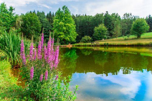 Der Naturbadeteich